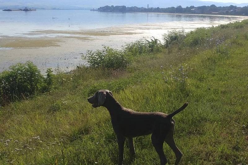 Where to train hunting dogs?