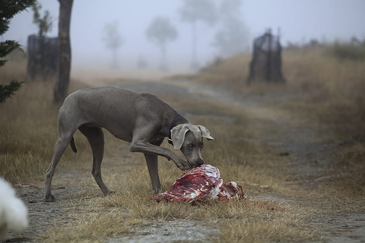 How to fix a flaw in hunting dogs