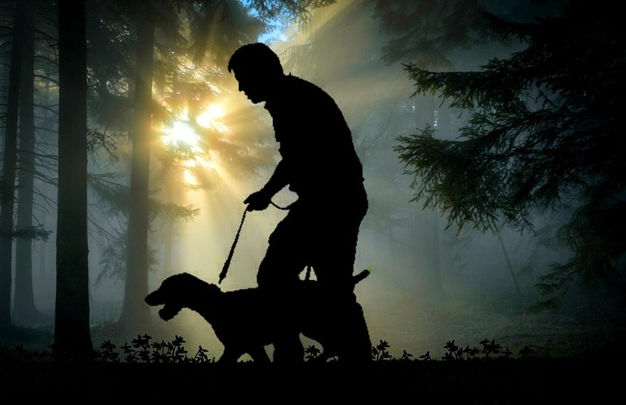 How to train a hunting dog to walk on a leash