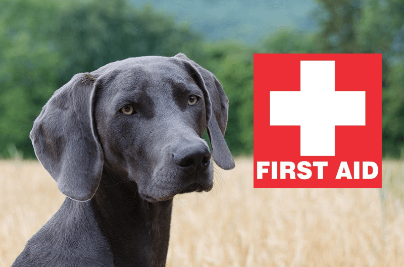igns of disease in hunting dogs
